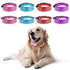 Pet Dog Cat Puppy Collars Rhinestones Leather Bling Crystal Diamond Strap Buckle