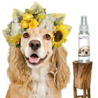 COCKER SPANIEL RELAX AROMATHERAPY THUNDERSTORM, FIREWORK FEAR, SEPARATION STRESS