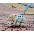 Hot Adjustable Pet hedgehog Harness for Training Playing traction rope