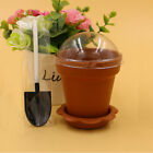 Flower Potted Shape Jelly Cake Yogurt Mousse Cups with Lid 10 PCS