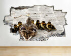 baby ducklings for sale