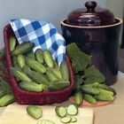 Alibi  F1 Cucumber Seeds - Great for making gherkin pickles! Produces all season
