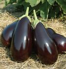 Galine F1 Hybrid Eggplant Seeds - High yielding, even in the North. !!!!