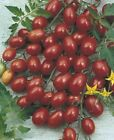 Crovarese Tomato Seeds high yields of  to  oz red grape tomatoes