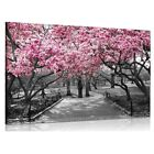 UK Black&White Pink Blossoms Art Print Picture Canvas Painting Wall Home Decor