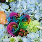 100pcs Colorful Rose Seeds Potted Bonsai Rare Flower Seeds Home Garden AGSG