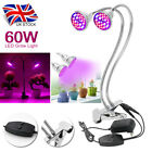 60W Dual Head LED Plant Grow Light Desktop Flexible Clip Lamp Full Spectrum UK