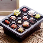 5 Set Seed Tray Plant Germination Starter Kit Grow Durable Plastic Humidity Dome