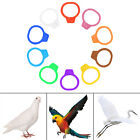 Plastic Chicken Clips Rings Ducks Rings Bands 8*7mm 8mm Clip On Leg Hens Pigeon