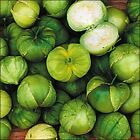 Toma Verde Mexican Green Tomatillo Seed Husk Tomato Seeds 01gr to 50gr