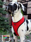 XXL Puppia Dog Harness Soft Mesh Large Big Breeds Up to 40