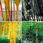 100pcs/bag Phyllostachys Pubescens Moso-bamboo Seeds Garden Plants Black Tinwa
