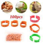 100X Chicken Hen Pigeon Leg Poultry Bird Dove Chicks Duck Parrot Foot Clip Ring