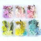 1Box Dried Flower Aromatherapy Epoxy Resin Filling Craft Decor Accessories DIY