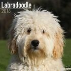 LABRADOODLE 2016 Wall Calendar - 30x30cm - Lovely images & a great gift