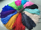 Wholesale, beautiful 10-100pcs rare color ostrich feathers 6