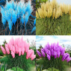 1000Pcs Pampas Grass Cortaderia Flower Rare Reed Seeds Garden Plant Pretty