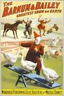Poster, Many Sizes; Barnum & Bailey Circus Clowns And Geese