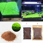 Aquarium Plant Seeds Aquatic Plant Seeds Water Grass Aquarium Fish Tank,Decor Gi
