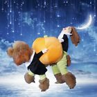 Funny Dogs Cats Cosplay Costume Small Doll Holds Pumpkin Halloween Clothing Suit