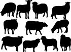 Counting Sheep Silhouette Wall Art Sticker Present Flock of Sleep Aid Bah Bah