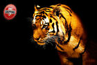 Animals Canvas Print Wall Art Premium Tiger on Black Background Picture Photo