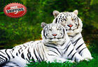 Animal Big Cat Two White Tigers Poster Print Wall Art Premium Picture Photo