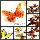 Coloured Butterflies, 3D, Weddings, Cakes, Scrapbooking, Cards, Floristry, Walls
