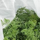 17g Garden Fleece Frost Insect Protection Plants Crop Protect 1.6m Width