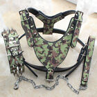 Large Breed Leather Spiked Studs Dog Harness Collar Leash Pitbull Mastiff Boxer