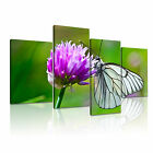 ANIMAL Butterfly 1 Canvas 4A-LH Framed Printed Wall Art ~ 4 Panels