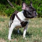 Small Dog Harness for Little Dog Breeds | XS Dog Harness, Leather & Soft Lining