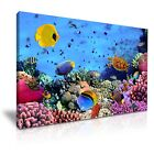 ANIMAL Sealife Canvas Framed Printed Wall Art 1 ~ More Size
