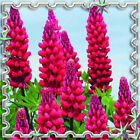 Perennial and annual blooming plants 90 - 250cm 35 -100 height Flower seeds