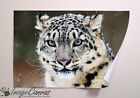 SNOW LEOPARD BIG CATS GIANT WALL ART POSTER A0 A1 A2 A3