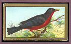 1910 T42-2 Gold Border Birds Red Breasted Tropical VG-EX 89320