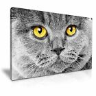 Blue Eyes Cat Canvas Wall Art Picture Print Decoration 5 Sizes Choose