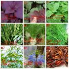 Multi-variety+Herb+Seeds+Aromatic+Spices+Vegetable+Medicinal+Plants+Organic+NEW