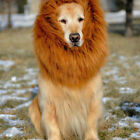 Hot Sale Pet Lion Mane Wig Halloween Costume Clothes for Big Dog A Pet Hair Wig