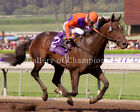 """Action This Day 2003 Breeders' Cup Juvenile Photo 8"""" x 10 - 24"""" x 30"""""""