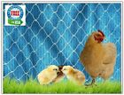 POULTRY NETTING 50' GAME BIRDS DUCKS CHICKENS PROTECTIVE PLANT NETS AVIARY NET