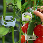 Plastic Garden Plant Clip Ring Great For Flower Bean Tomato Cucumber Support