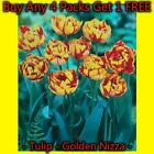 Golden Nizza Double Red & Yellow Tulip Bulbs Plant Now Pack Of 1 20 50 100 250