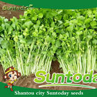 Suntoday Cut LEAF CELERY Apium Graveolens Chinese Herb Vegetable Seeds 200Pcs