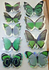 3D Butterfly Mariposa Realistic Photo Stickers, Undiscovered Species Replicas
