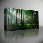 TRANQUIL FOREST TREES LANDSCAPE - PREMIUM GICLEE CANVAS ART *Choose your size