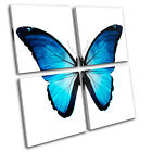 Morpho Butterfly Blue Animals MULTI CANVAS WALL ART Picture Print VA