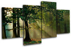 Forest Landscapes MULTI CANVAS WALL ART Picture Print VA