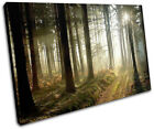Woodland Forest Landscapes SINGLE CANVAS WALL ART Picture Print VA