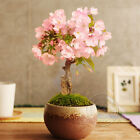 New 60 Succulents Seeds Rare Mini Potted Flower Seeds Office Home Decorative